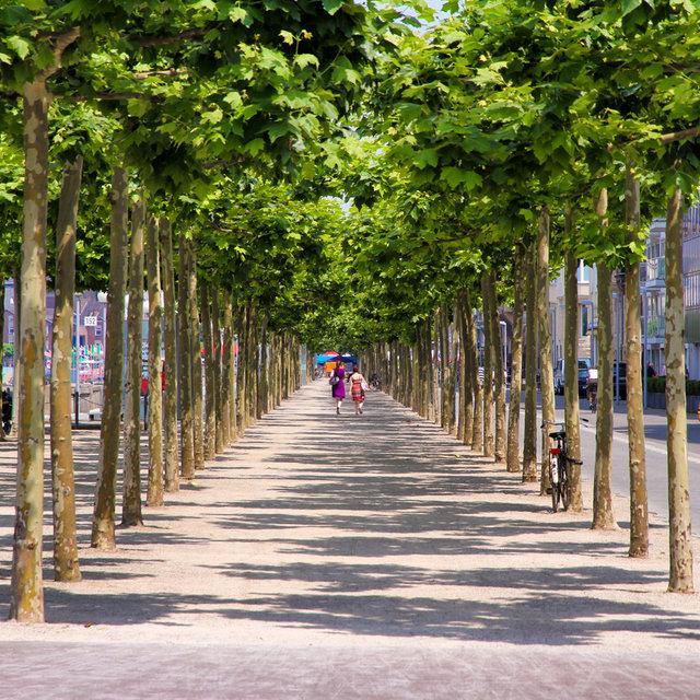 Düsseldorf Rhine