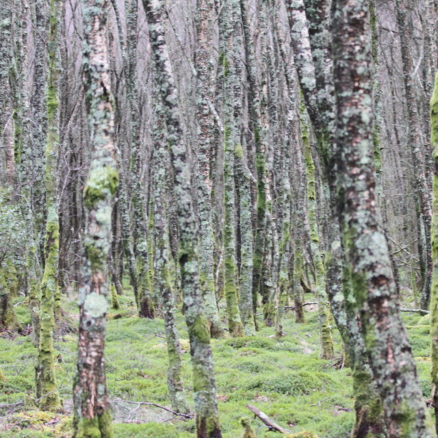 Woods at the Upper Lake in Glendalough.