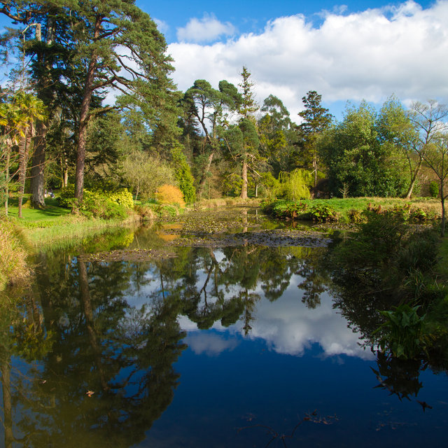 View over a pond in the Fota Gardens and Arboretum.