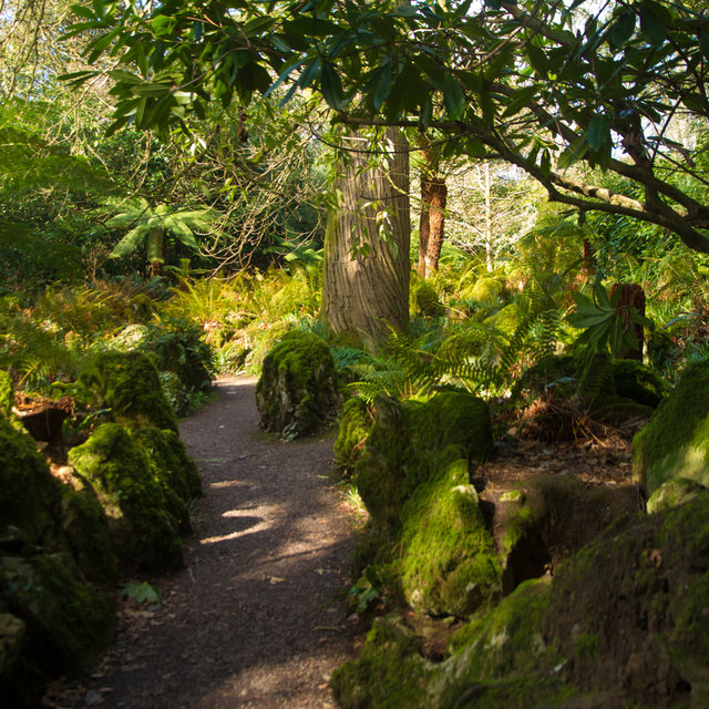A path through the Fota Gardens and Arboretum.