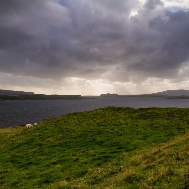 Grazing sheep at the shore of Loch Harport on the Isle of Skye.
