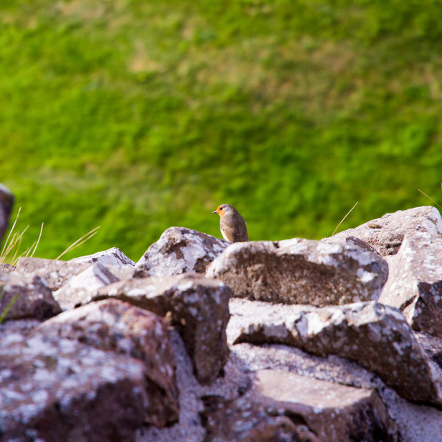 Robin in the ruins of Urquhart Castle.