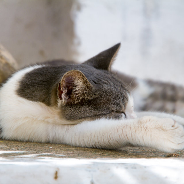 Cat sleeping on a terrace.