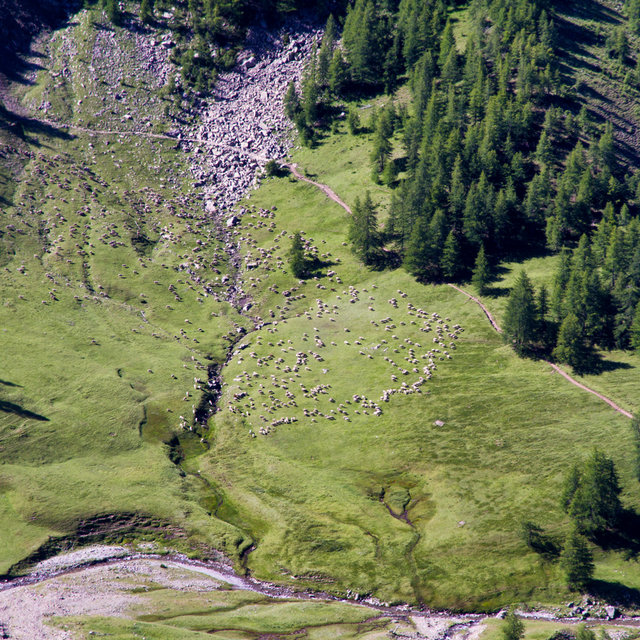 Grazing sheep seen from the slopes of Mont Pelat.