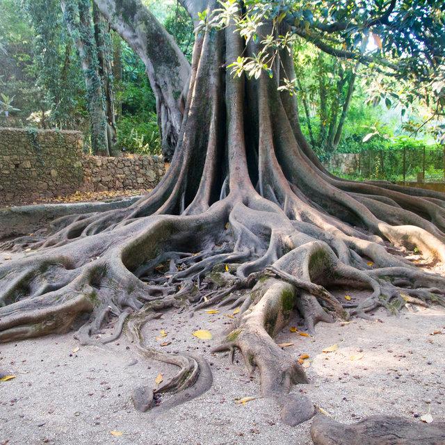 A tree trunk in the gardens of the Quinta das Lágrimas.