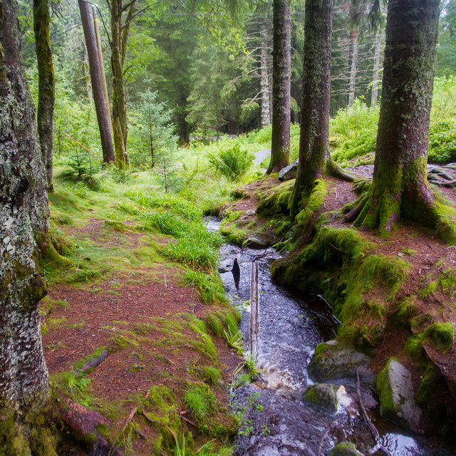 A streamlet on the top of Mt. Fløyen.