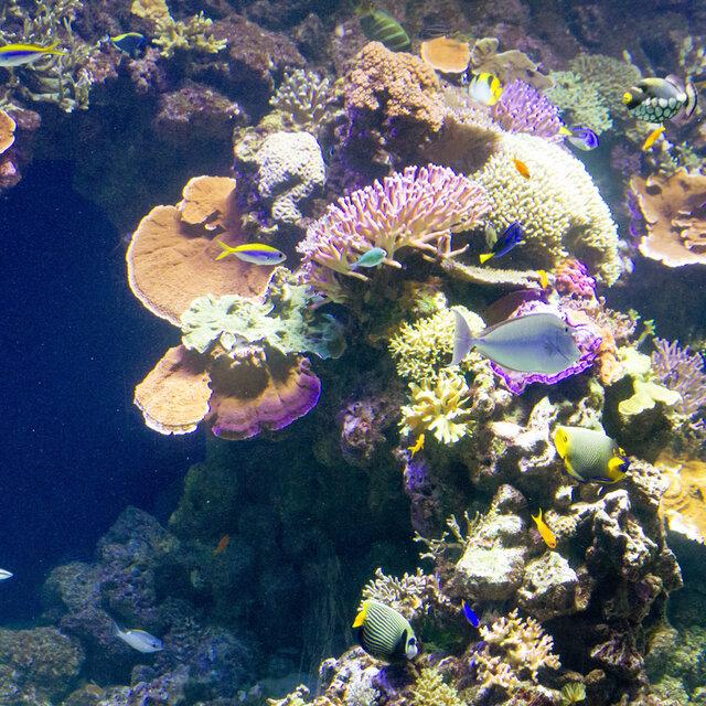 Copenhagen Aquarium